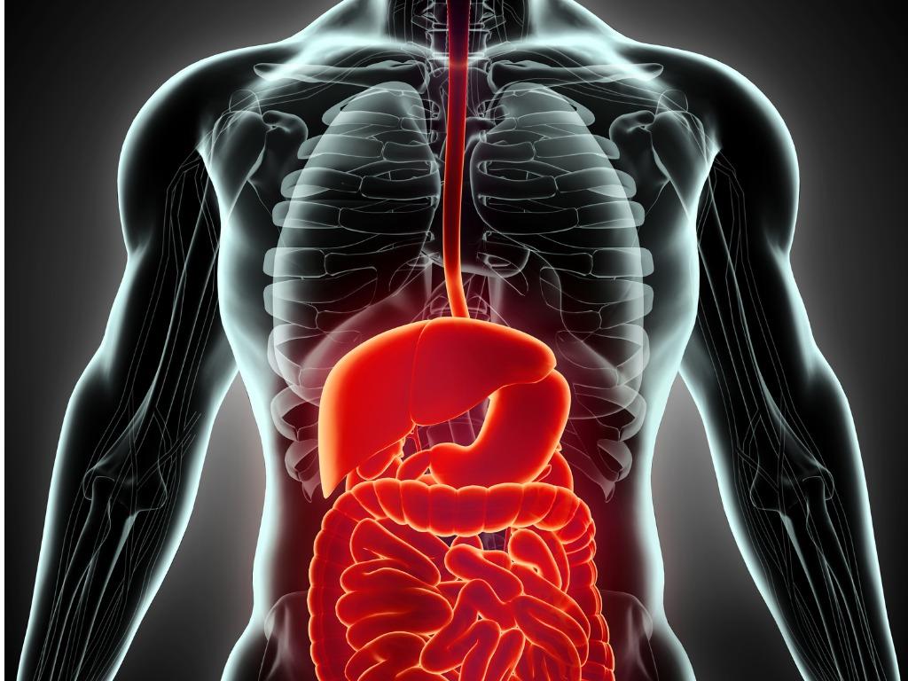visceral organ release